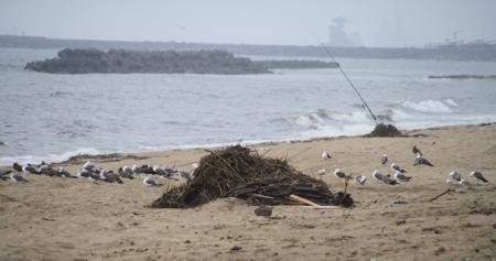 荒れた海を見つめるカモメたち